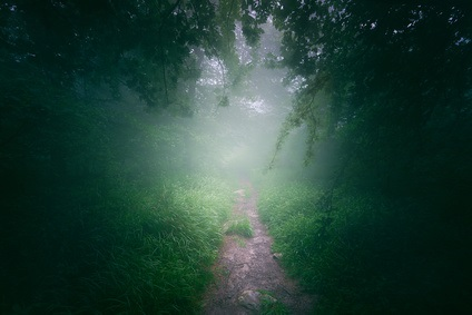 Path in the foggy forest at morning